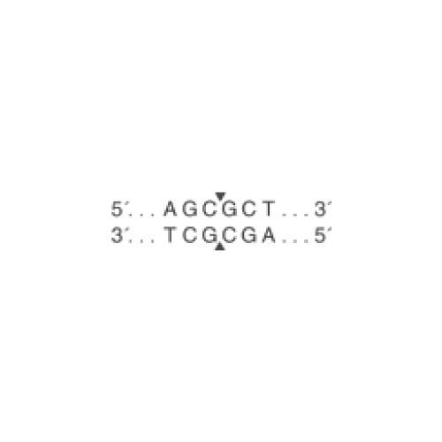 5'-AGC|GCT-3'
